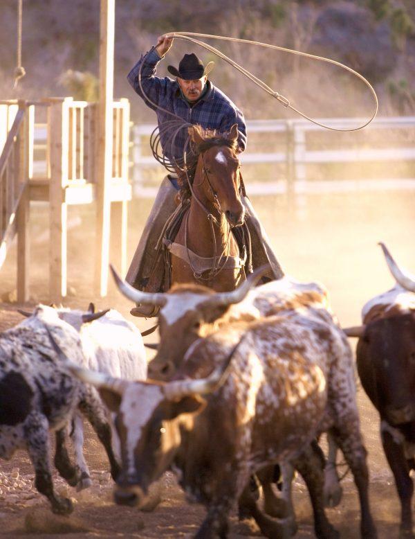 Horsin' Around Adventures - Sedona, AZ horseback riding